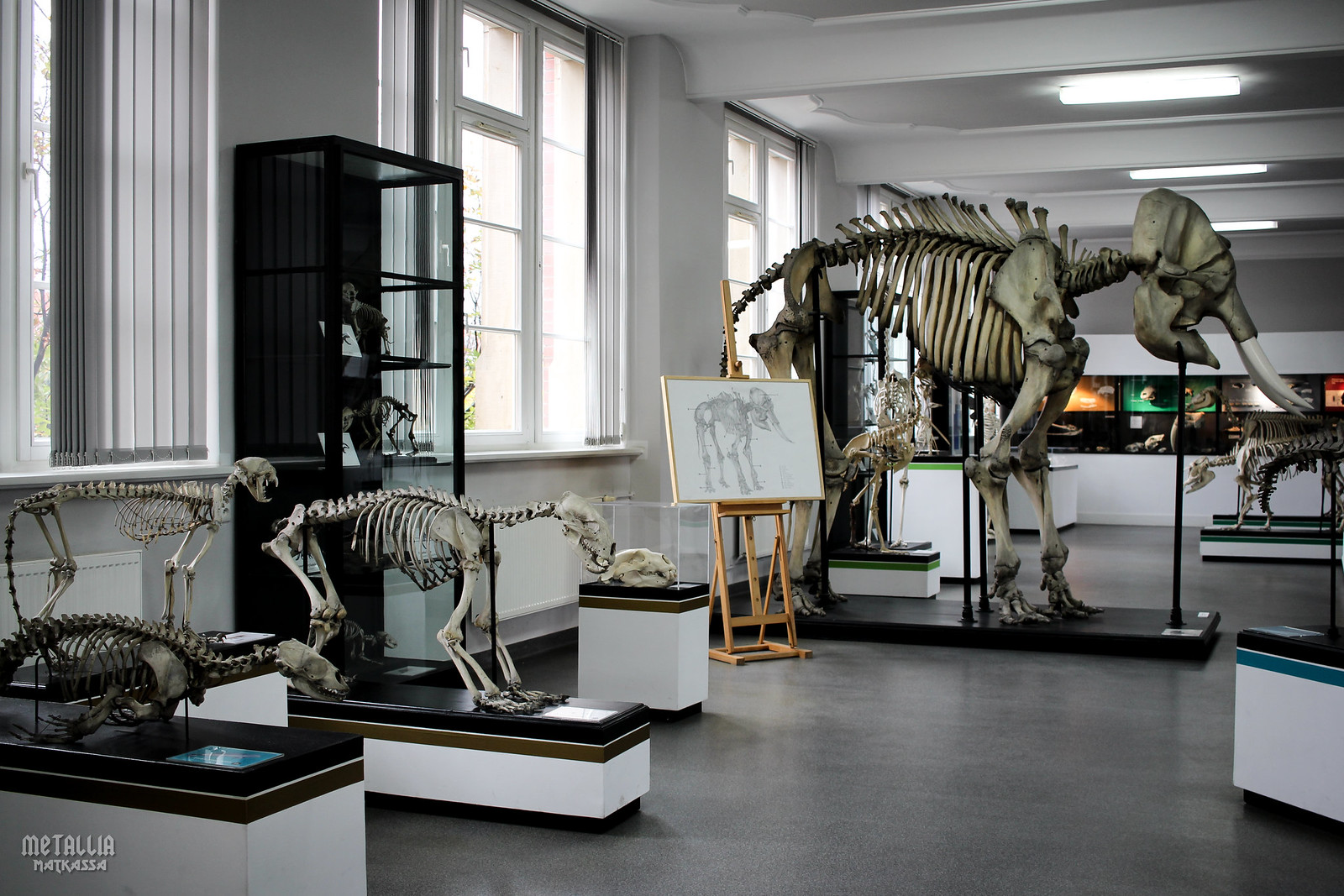 wroclaw museum of natural history