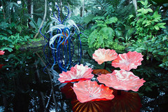 Chihuly 2017 - 027