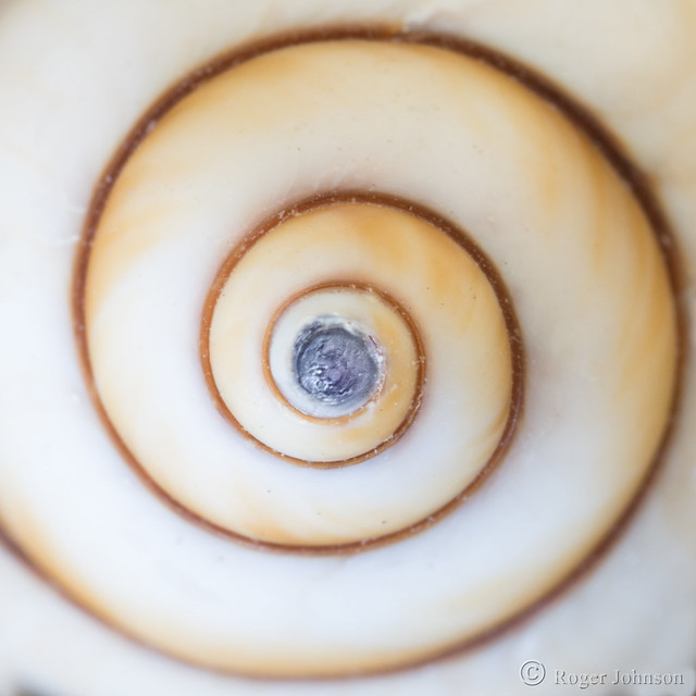The Spiral Tip Of, Nikon D7100, AF Micro-Nikkor 105mm f/2.8