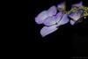 Photo:Hydrangea By t.kunikuni