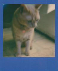 polaroid week 2 Ned