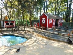 Childrens Zoo: ducks