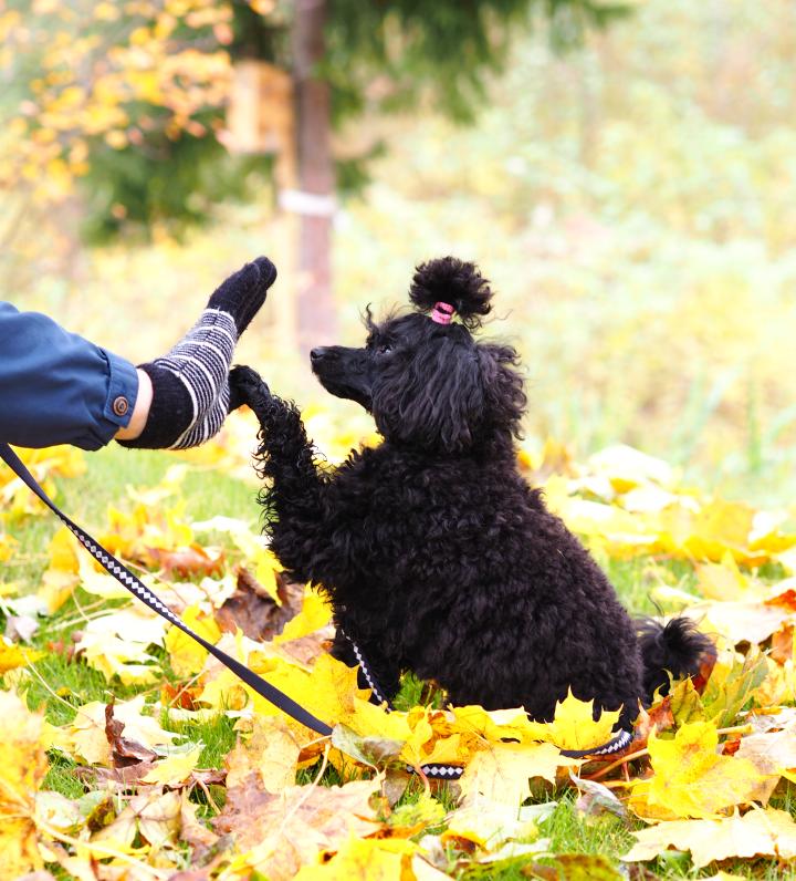 autumn_poodle4