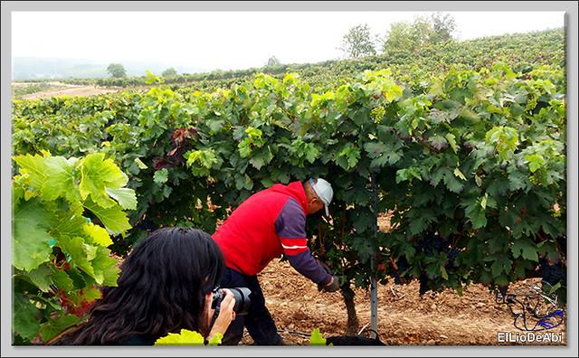 La Rioja siempre es un lugar dulce (7)