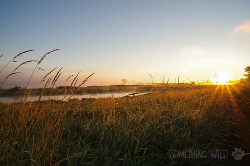 Eagle Marsh