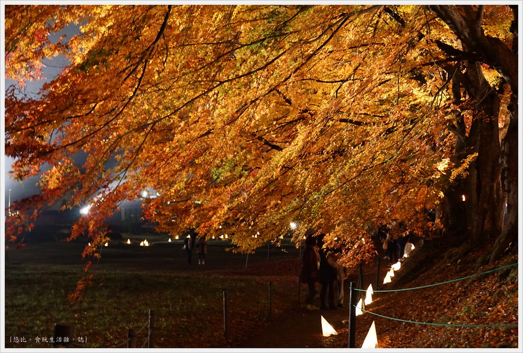 紅葉迴廊-紅葉祭-夜楓-28