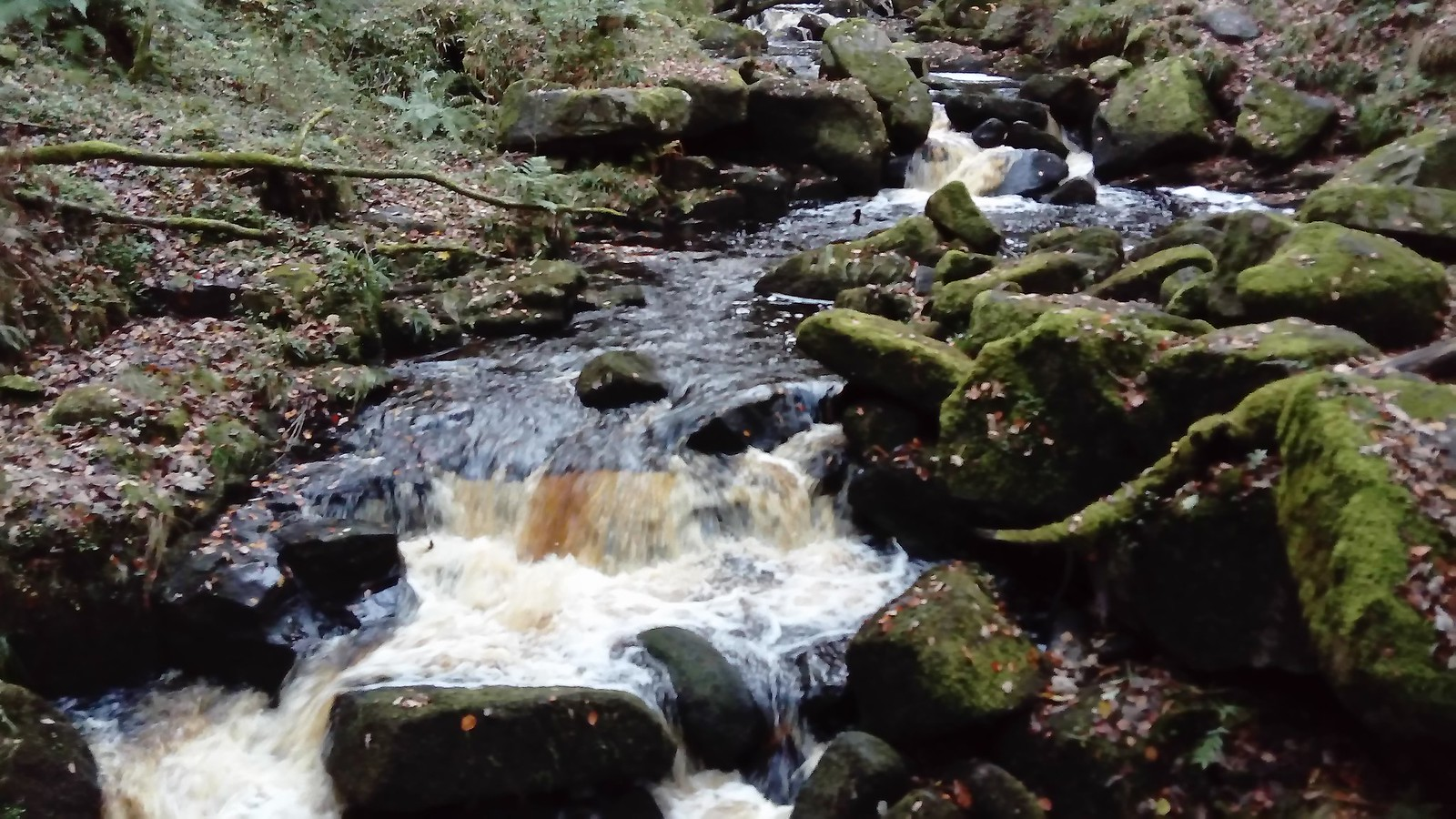 Burbage Brook in Padley Gorge SWC Walk 266 - Sheffield to Bamford (via Burbage Rocks and Stanage Edge) or to Moscar Lodge [Grindleford Start]