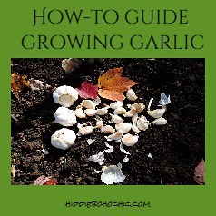 Pinterest Pin Growing Garlic