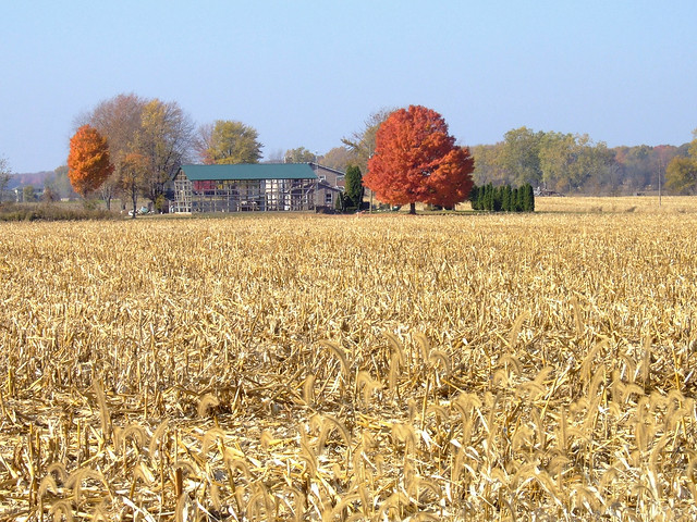Farmyard on Strange Highway