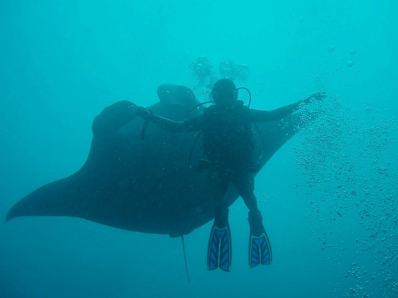 diver and manta ray