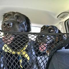 The Doggies
