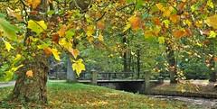 Herfst / Fall / Autumn 2