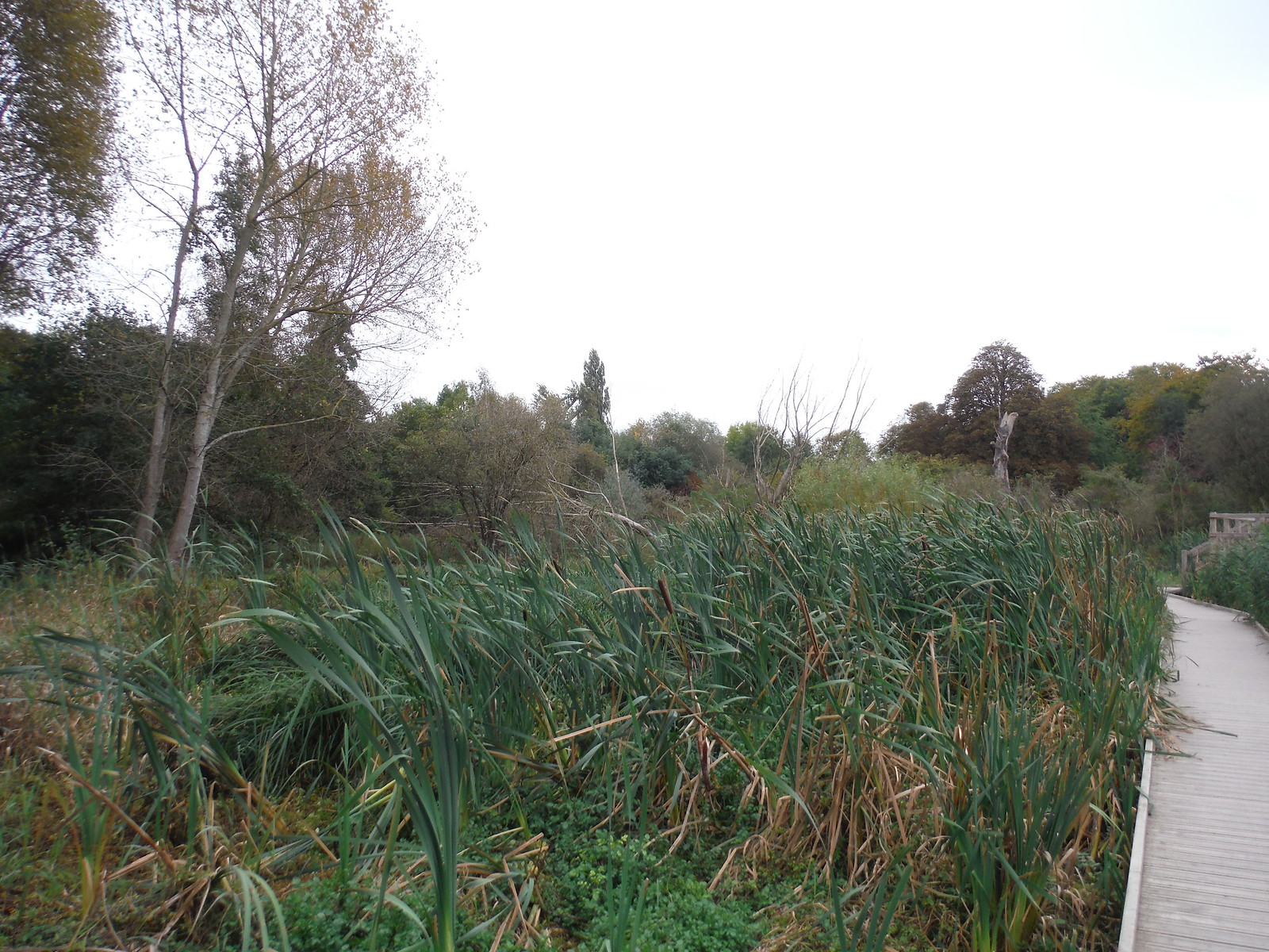 Boardwalk through Wetlands, Morden Hall Park SWC Walk Short 13 - Morden Hall Park and Merton Abbey Mills