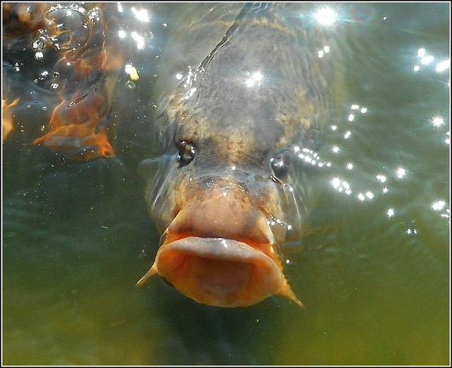 Fish Face .!!
