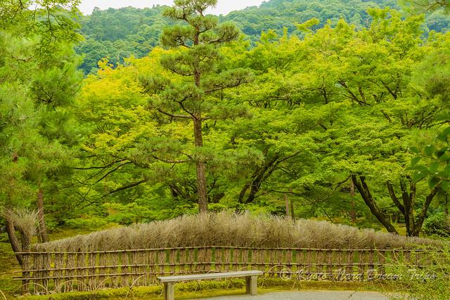Lion's Roar Garden of Hōgon-in, Arashiyama-Kyoto.