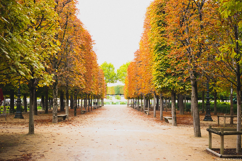 Fall in the Tuileries