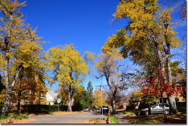 2017 Maple in Fall, Boulder, Colorado  (48)