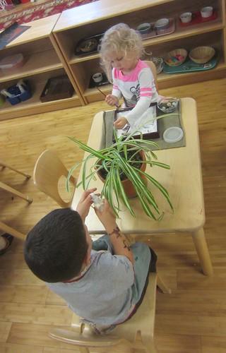 japanese sand garden & plant care
