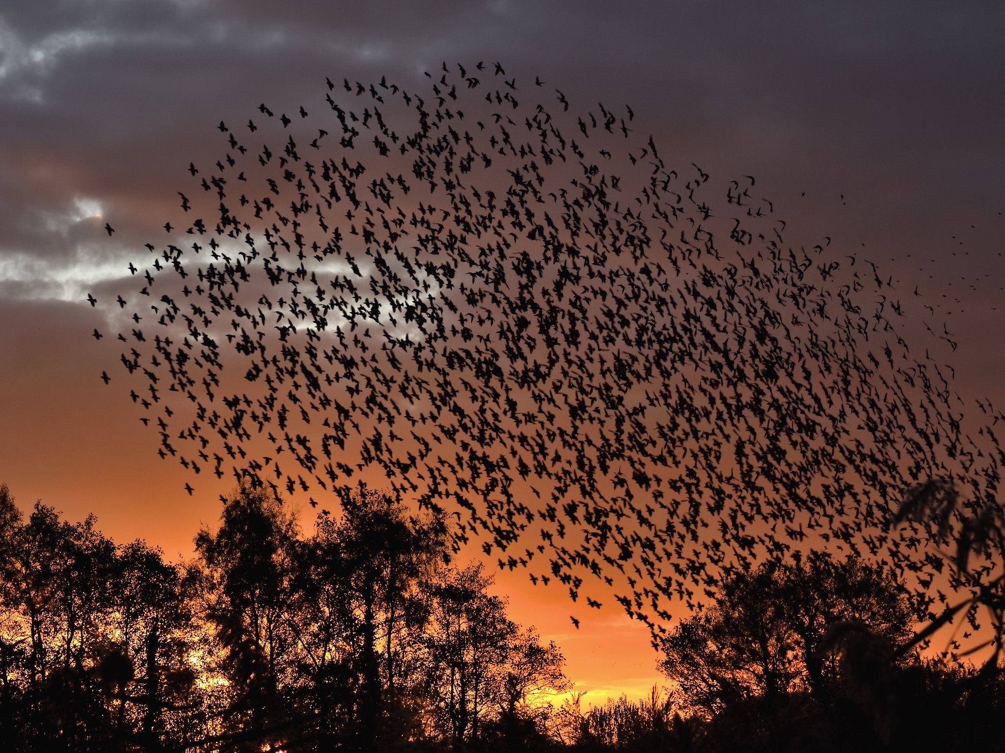 Starlings at Ham Wall Somerset, and a lovely sunset.