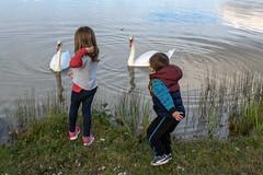 Enfants et cygnes_8468 - Photo of Pompogne