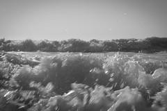 Surf #1 Ocean City