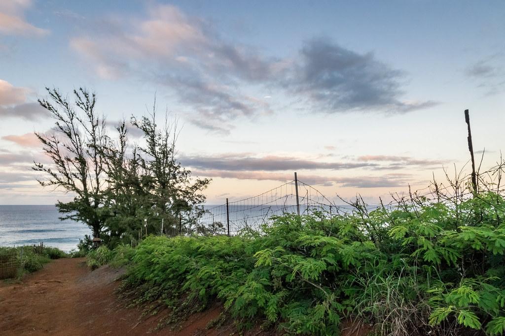 the unmarked, secret trail to Larsen's Beach