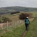 SDW: Annington Hill