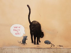 #Roma  #RioneBorgo   #murales #muralesart  #cat #blackcat #Rome