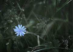 Fleur - Photo of Villefranche-de-Lonchat