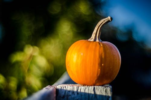 Samish Pumpkin