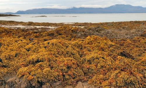 27th September 2017. Sea Salad on Old Head Beach, County Mayo, Ireland.