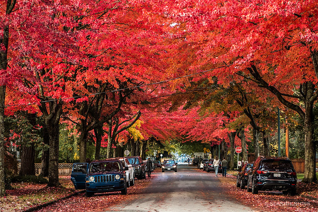 I Saw Red 🍁❤ Vancouver, BC