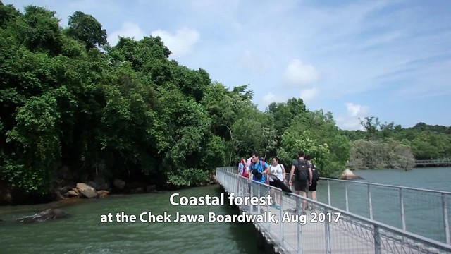 Exploring coastal forests on the Chek Jawa boardwalk