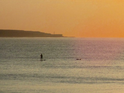 Dolphin and standup paddleboard at Cronulla