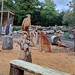 Chainsaw carved wooden items