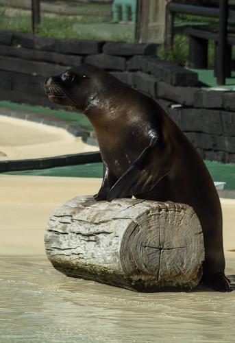 Walrus says goodbye