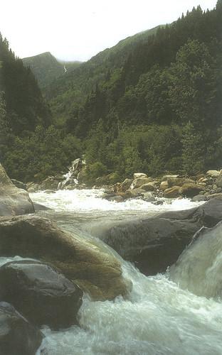हमें प्रकृति की अनमोल पर्यावरणीय उपयोगिता का आदर व संरक्षण करना चाहिए