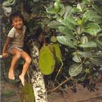 Artocarpus heterophyllus tree and fruit