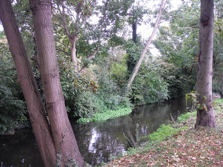 Water Channel in Morden Hall Park