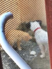 Dog and Cat #Joman #Jamon #Cat #Dog #RD #RepublicaDominicana