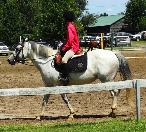 pony 085 (1)
