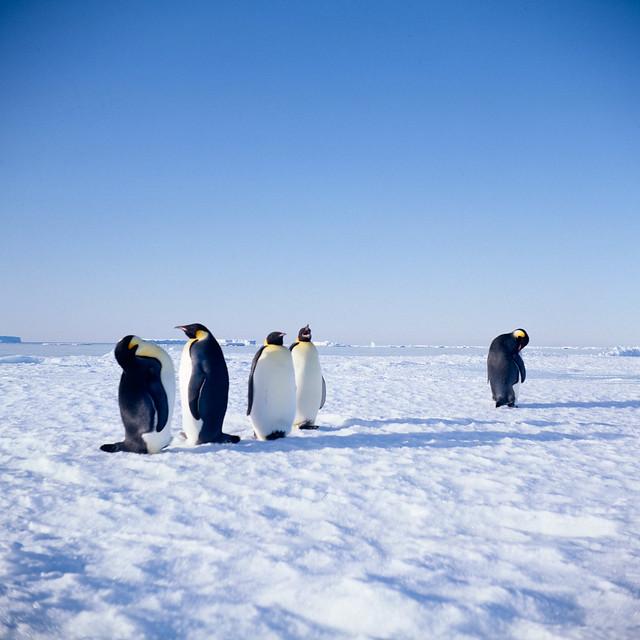 Antarctica91_66_1.jpg