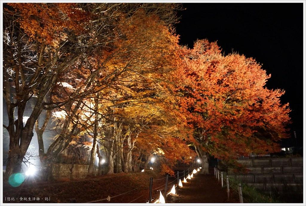 紅葉迴廊-紅葉祭-夜楓-29