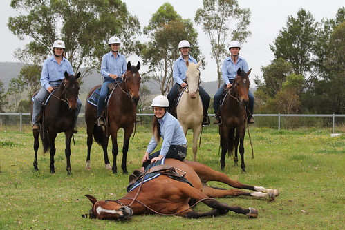 Tocal stock horse sale 2017