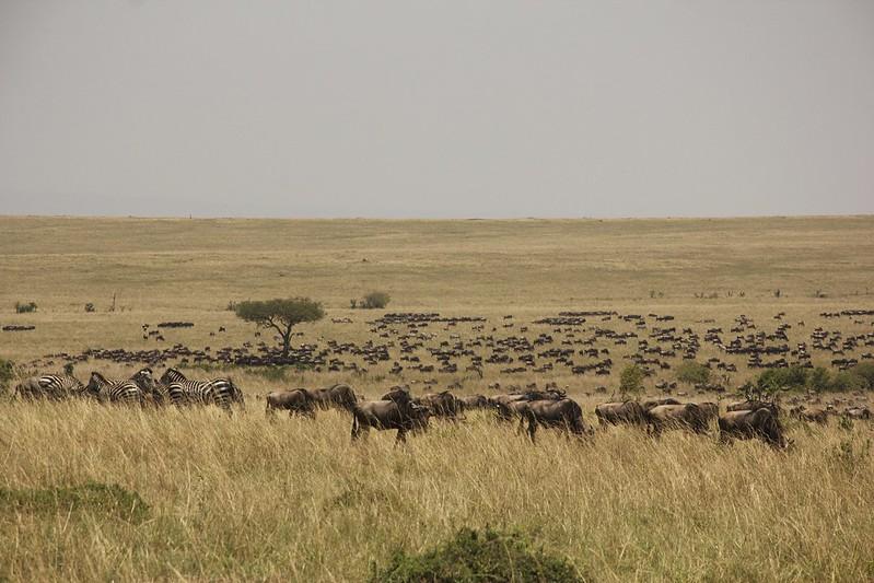 Maasai Mara 2 35