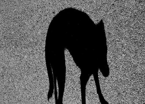L'ombre de Pépite