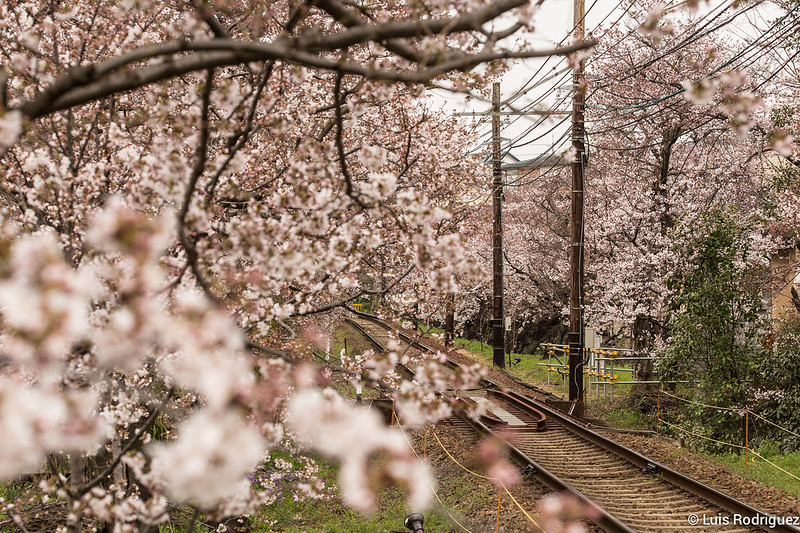 Tunel-Sakura-Kioto-Randen-13