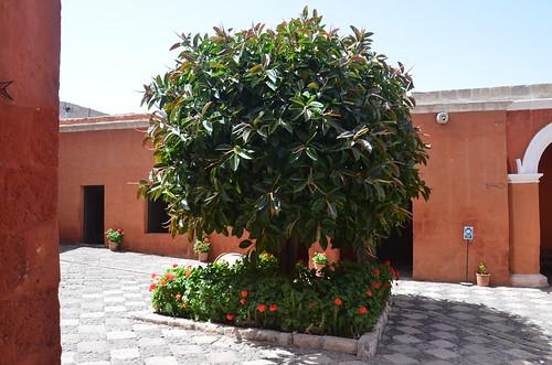 In einem Innenhof ein Baum mit roten Blüten herum.