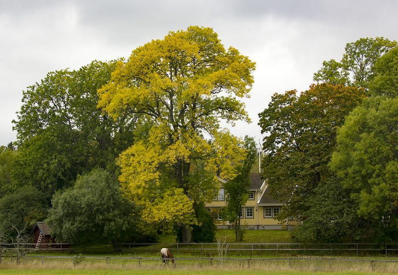 Autumn at the farm