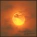 Saharan Sun - Hessay York UK DSC_0054b